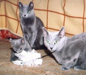 фото кошек и котят и котов